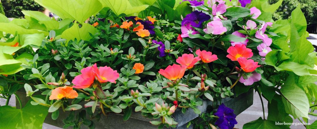 Photo of flower pot